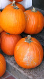 Orange pumpkins. An assortment of large, orange pumpkins Royalty Free Stock Images