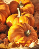 Orange pumpkins Stock Photography