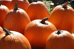 orange pumpkins Стоковые Фотографии RF
