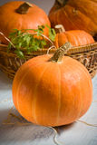 Orange pumpkins. In the table stock photo