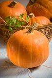 Orange pumpkins Stock Photo