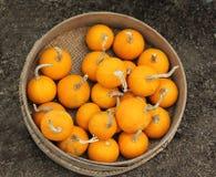 orange pumpkins Стоковое Фото