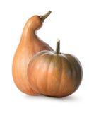 orange pumpkins Стоковые Изображения RF