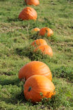orange pumpkins Arkivfoton