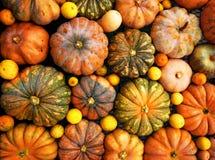 Orange pumpkins royalty free stock images