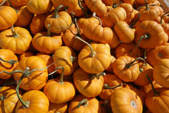 Orange Pumpkins Background Royalty Free Stock Images