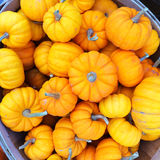 Orange pumpkins in a basket Royalty Free Stock Photo