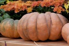 Beautiful orange pumpkin and flowers. Orange pumpkins beautiful form near to beautiful orange flowers royalty free stock photography