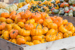 Orange pumpkins in the carriage Stock Image