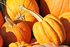Orange Pumpkins Stock Photography