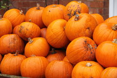 Orange Pumpkins. Stock Photo
