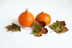 Orange pumpkins and dry leaves on white background. Some fresh orange pumpkins and dry maple leaves on white concrete background, copy space. Autumn concept royalty free stock image