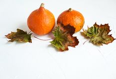 Orange pumpkins and dry leaves on white background. Some fresh orange pumpkins and dry maple leaves on white concrete background, copy space. Autumn concept royalty free stock photography