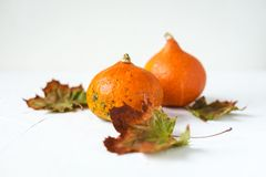 Orange pumpkins and dry leaves on white background. Some fresh orange pumpkins and dry maple leaves on white concrete background, copy space. Autumn concept royalty free stock images