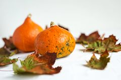 Orange pumpkins and dry leaves on white background. Some fresh orange pumpkins and dry maple leaves on white concrete background, copy space. Autumn concept stock photography