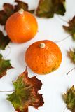 Orange pumpkins and dry leaves on white background. Some fresh orange pumpkins and dry maple leaves on white concrete background, copy space. Autumn concept stock photo