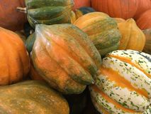 Orange pumpkins and gourds. Stock Images
