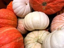 Orange pumpkins and gourds. Stock Image
