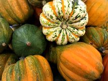 Orange pumpkins and gourds. Royalty Free Stock Image