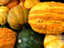 Orange pumpkins and gourds. Stock Photography