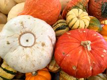 Orange pumpkins and gourds. Royalty Free Stock Images