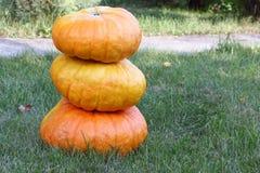 Orange pumpkins on a grass in a garden Stock Photos