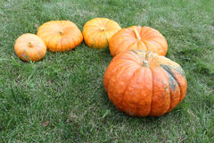 Orange pumpkins on a grass in a garden Royalty Free Stock Image