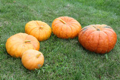 Orange pumpkins on a grass in a garden Royalty Free Stock Images
