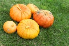Orange pumpkins on a grass in a garden Stock Photo