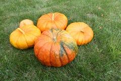 Orange pumpkins on a grass in a garden Stock Photography