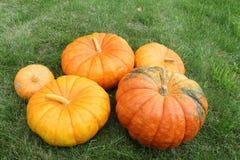 Orange pumpkins on a grass in a garden Royalty Free Stock Photos
