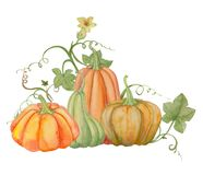 Orange pumpkins, Halloween, watercolor illustration, fruits and leaves. Drawing for printing on fabric, textile design, wallpaper, wrapping paper, linens royalty free illustration
