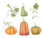Orange pumpkins, Halloween, watercolor illustration, fruits and leaves. royalty free illustration