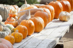Orange Pumpkins and Hay in Rustic Fall Setting Royalty Free Stock Photos