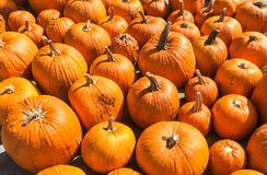 Orange Pumpkins. Plenty of pumpkins for Haloween Party Stock Photos