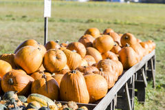 Orange pumpkins in a random pile Royalty Free Stock Photography