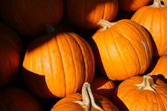 Orange pumpkins for sale. Large orange pumpkins for sale at a grocery store in the late afternoon light Royalty Free Stock Photography