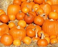 Orange Pumpkins scattered on hay Stock Image