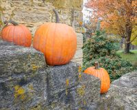 Orange Pumpkins on Stone Stairway with Orange Fall Tree stock photo