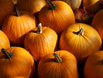 Orange pumpkins in sunlight. Orange pumpkins - winter squash - sorted outside for sale. Harvest time. Halloween season royalty free stock photography