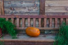 Orange pumpkins on a wooden bench in the garden royalty free stock images