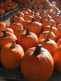 Orange pumpkins on wooden pallets stacked for shipping royalty free stock photo
