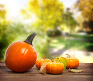 Orange pumpkins. With a yellow trees background royalty free stock image