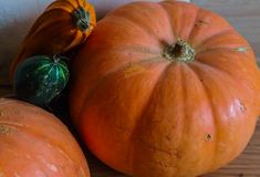 Orange pumpkins and zucchini on the floor royalty free stock images