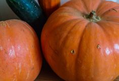 Orange pumpkins and zucchini on the floor stock images