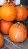 orange pumpor Royaltyfria Bilder