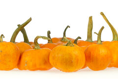 orange pumpor Arkivbild