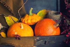 Orange pumpor i resväska Royaltyfria Bilder