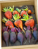 Orange and Purple Beet Vegetables in Wood Box Stock Photos