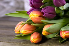Orange and purple tulips Royalty Free Stock Photos